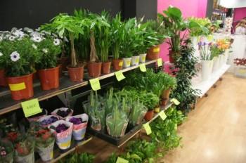 Cambios en el IVA aplicable a plantas y flores